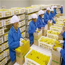 全自动鲜玉米蒸煮漂烫机速冻玉米加工生产线