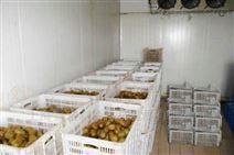 大樱桃、猕猴桃保鲜库及气调库设计造价