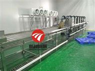 青菜流水线蔬菜清洗加工生产线