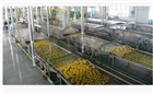 全自动梨罐头加工生产线