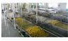 全自动桔子罐头加工生产线