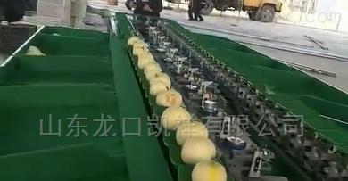 四川柠檬分选机设备