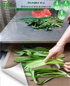 隧道式蔬菜杀青干燥机连续生产微波杀青设备