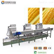 玉米脱粒机 玉米去粒机生产线