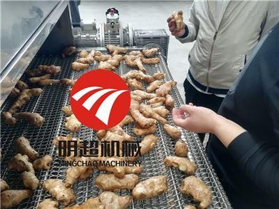 明超大姜清洗机生产工厂
