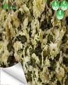 菊花用微波烘干设备干燥效果怎么样