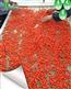 西北枸杞微波干燥设备西安厂家定制