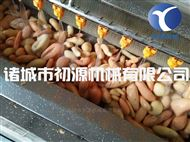 新一代毛辊去皮机红薯土豆清洗去皮设备厂家