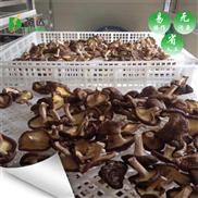 SD-RB6P-香菇烘干设备的价格