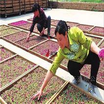 玫瑰花干燥新机械 空气能烘房厂家