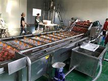 全自动喷淋式果蔬清洗设备西红柿清洗机