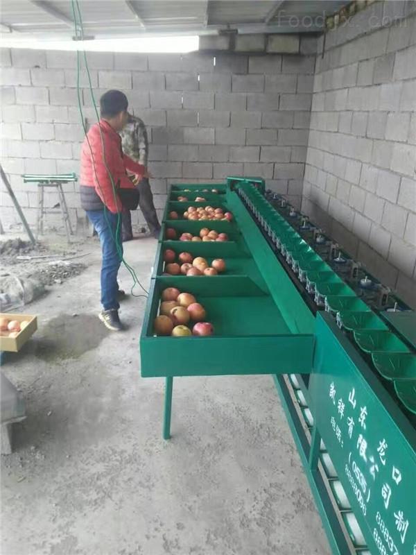 苹果分选机 山东苹果选果机厂家