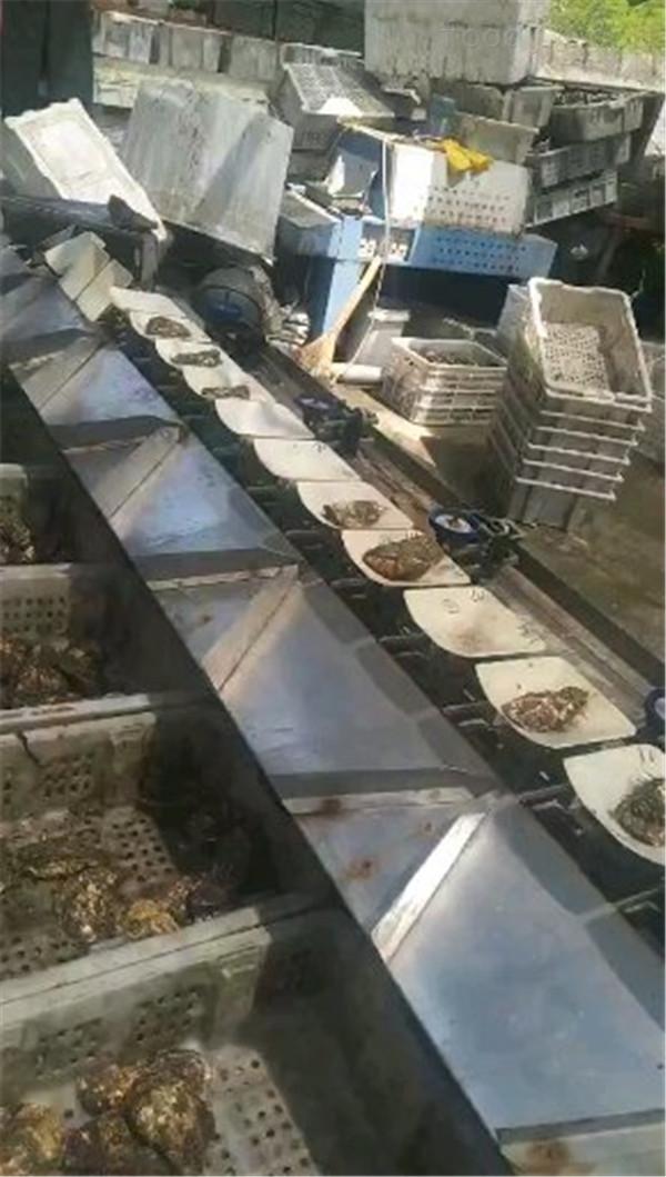 乳山牡蛎分选机质优价廉