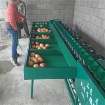 重量選果機 蜜桃分選機 桃子分大小機器
