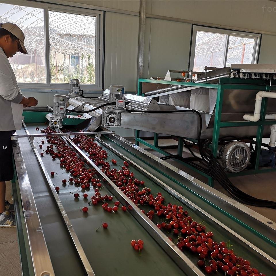 大樱桃选果机 樱桃大小分级 冷水分选樱桃