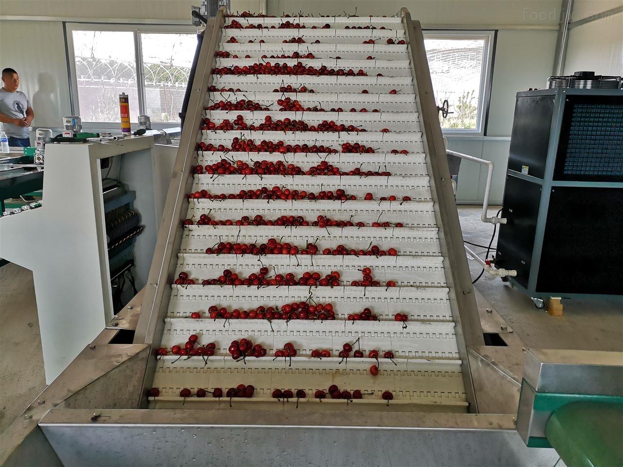 樱桃冷却水清洗消毒自动选果机