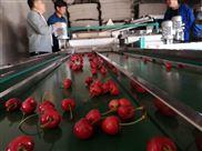 樱桃选果机 多功能全自动分拣机