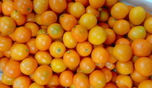 多地橙子崛起 深入加工延长产业链指日可待