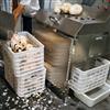 DY-2800果蔬蔬菜土豆芋头清洗机